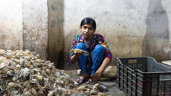 child_labour_shrimp_peeling